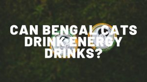 Can Bengal Cats Drink Energy Drinks?