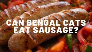 Can Bengal Cats Eat Sausage?