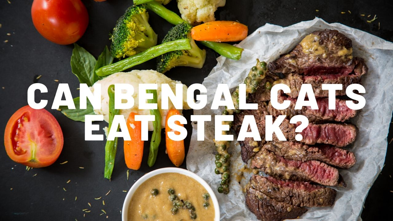 Can Bengal Cats Eat Steak?