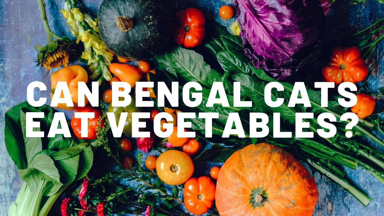 What Vegetables Can Bengal Cats Eat?