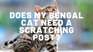 Does My Bengal Cat Need A Scratching Post?