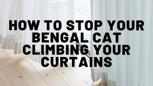 How To Stop Your Bengal Cat From Climbing Curtains