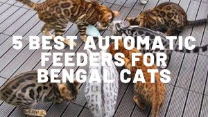 5 Best Automatic Feeders For Bengal Cats
