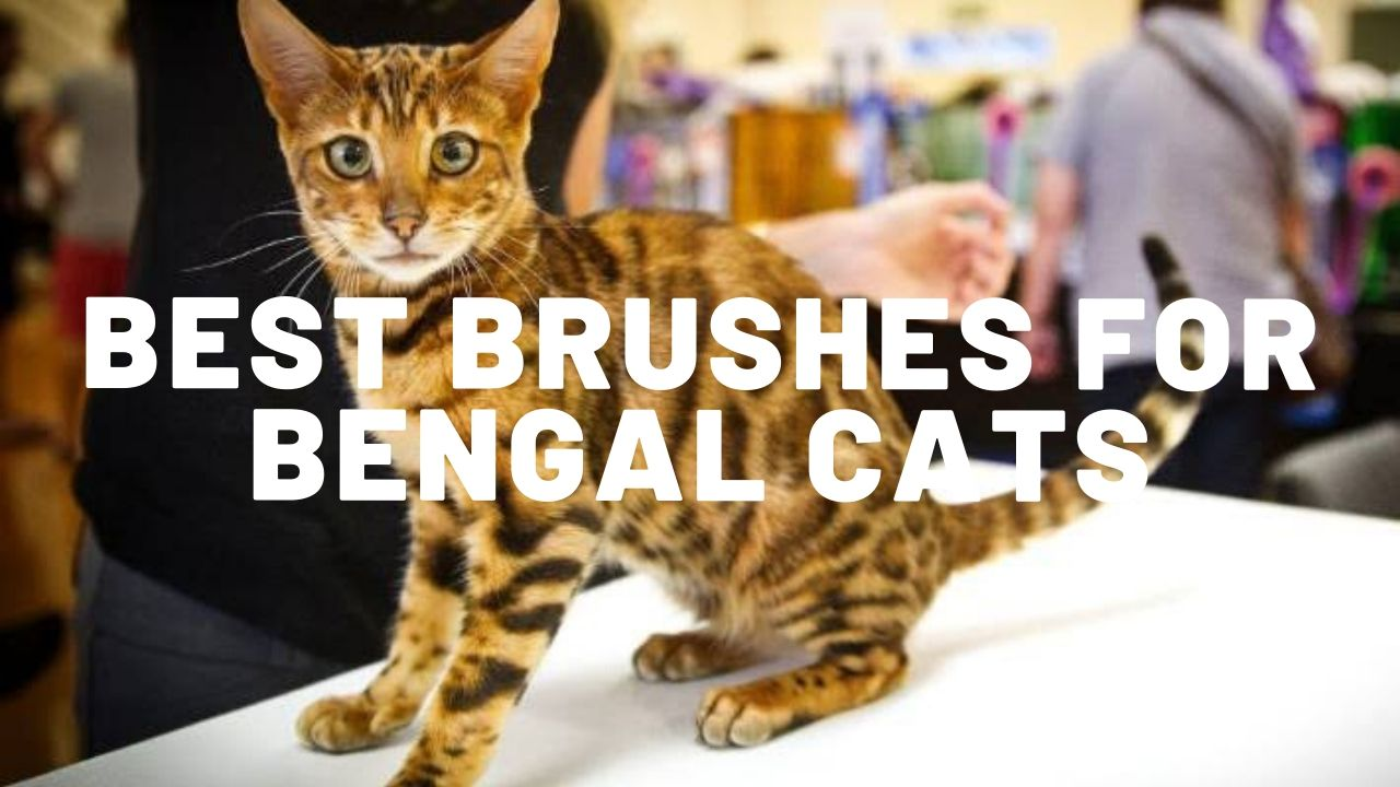 5 Best Brushes For Bengal Cats