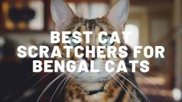 5 Best Cat Scratchers For Bengal Cats