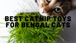 5 Best Catnip Toys For Bengal Cats