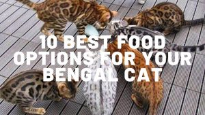 10 Best Foods For Bengal Cats