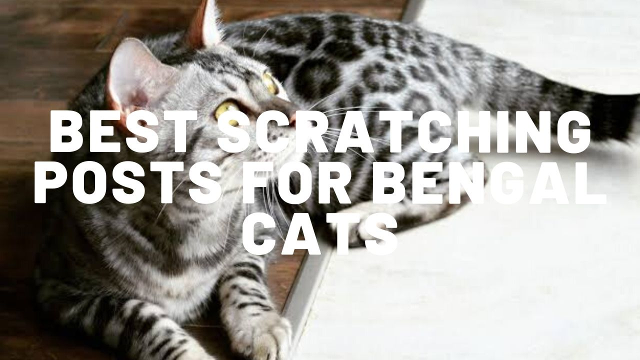 10 Best Scratching Posts For Bengal Cats