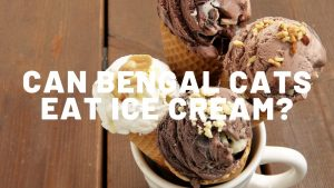 Can Bengal Cats Eat Ice Cream?