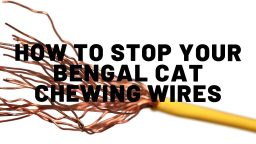 How To Stop Your Bengal Cat From Chewing Wires