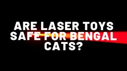 Are Laser Toys Safe For Bengal Cats?