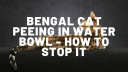 Bengal Cat Peeing In Water Bowl - What Can You Do To Stop This?