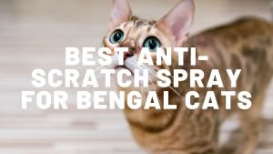 Best Anti-Scratch Spray For Bengal Cats