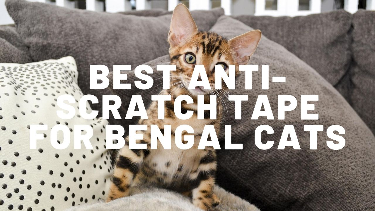 Best Anti Scratch Tape For Bengal Cats