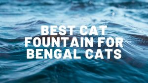 Best Cat Fountain For Bengal Cats