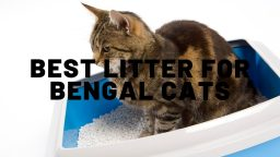 Best Litter For Bengal Cats