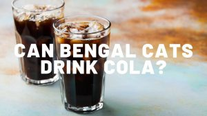Can Bengal Cats Drink Cola?