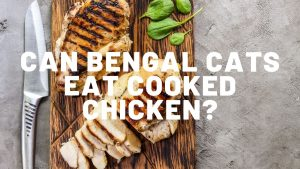 Can Bengal Cats Eat Cooked Chicken?