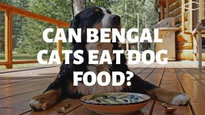 Can Bengal Cats Eat Dog Food?