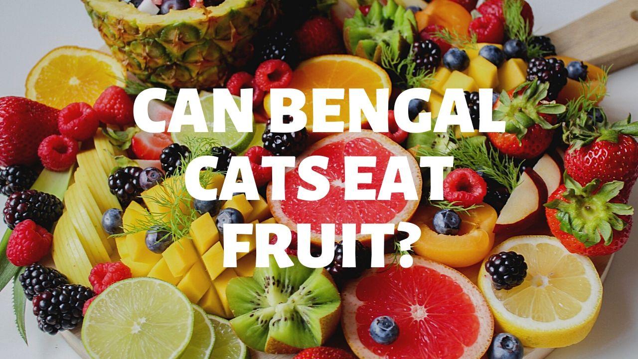 Can Bengal Cats Eat Fruit?