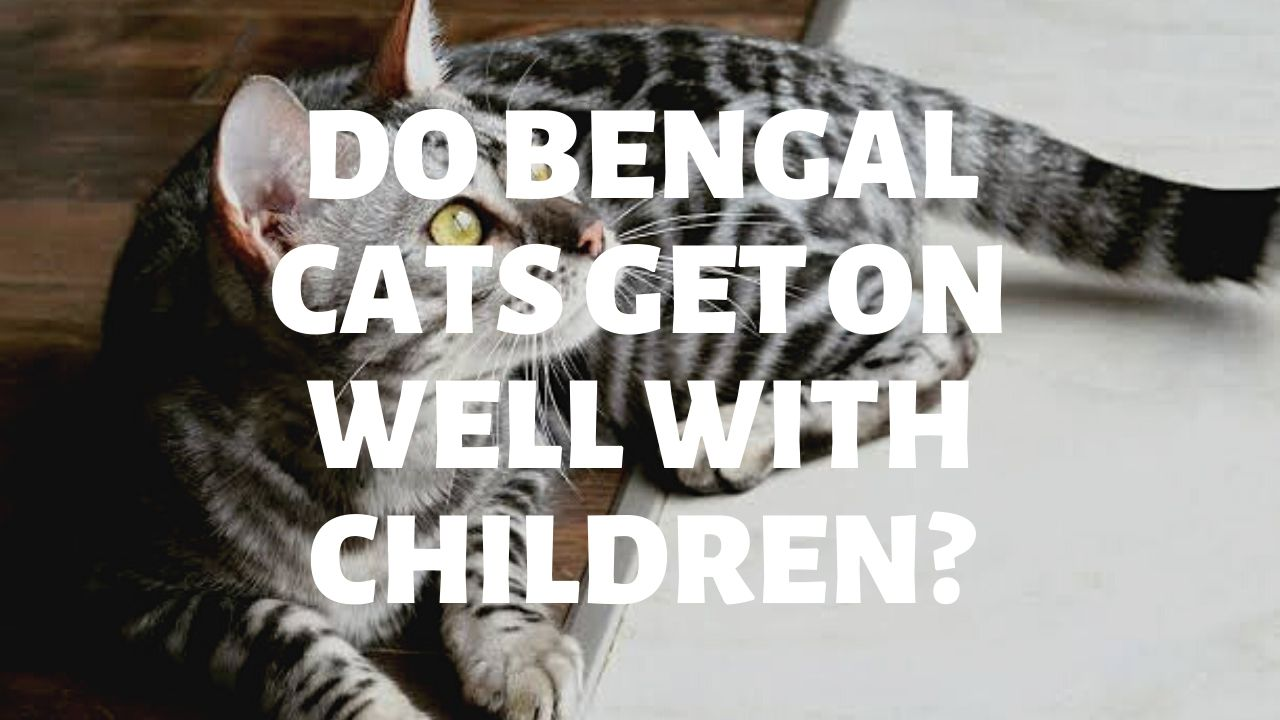 Do Bengal Cats Get On Well With Children?