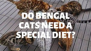 Do Bengal Cats Need A Special Diet?