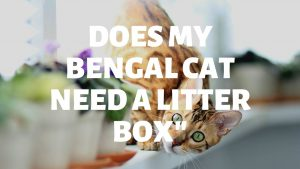Does My Bengal Cat Need A Litter Box?