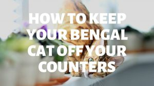 How Do I Keep My Bengal Cat Off My Counters?