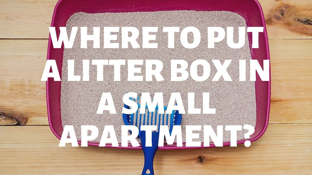 Where To Put A Litter Box In A Small Apartment?