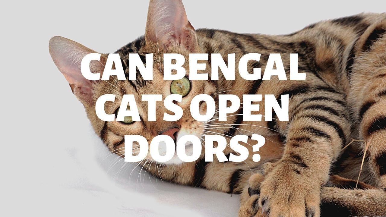 Can Bengal Cats Open Doors